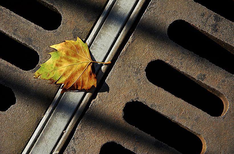 Autumn-761419